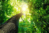 δάσος — Φωτογραφία Αρχείου