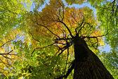 Höstens skogsträd — Stockfoto