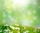 Flower — Stok fotoğraf