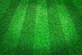 Green grass natural — Stock Photo