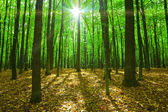 Forest trees. — Stock Photo