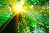 森林树木 — 图库照片