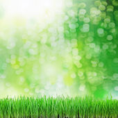 Green grass on the green backgrounds — Stock Photo