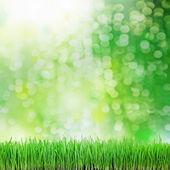 Groen gras op de groene achtergrond — Stockfoto