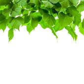 Las liść drzewa. — Zdjęcie stockowe