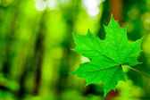 Forest trees leaf. — Stock Photo