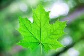 Bos bomen blad. — Stockfoto