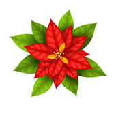 Christmas Star flower poinsettia isolated — Stock Vector