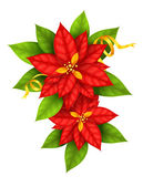 Christmas Star flowers poinsettia with gold ribbon — Stock Vector