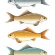 Set of live colour fish — Stock Vector #43989249