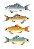 Set of live colour fish — Stock Vector