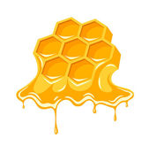 Honey flowing of bee honeycombs — Stock Vector