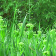 Meadow vegetation in rain — Stock Video