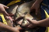 Fish in net — Stock Photo