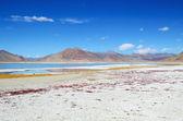 Salt lake in Ladakh — Stock Photo