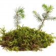 Young plants — Stock Photo #26586025
