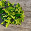 Green peppermint — Stock Photo