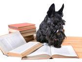 Cane di lettura — Foto Stock