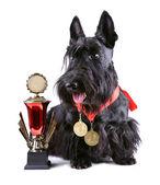 Winner dog — Stock Photo
