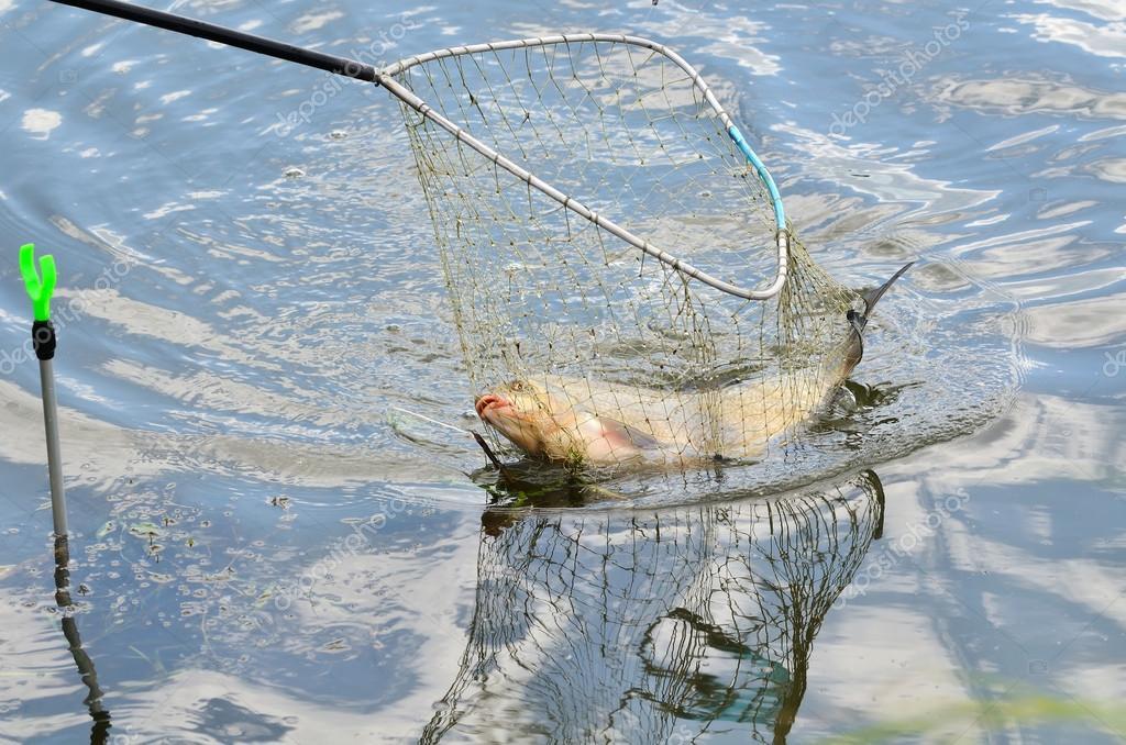 как ловят рыбу сачком