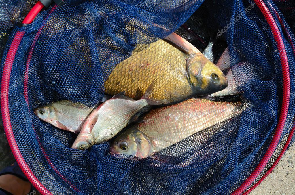 видео рыбалка сетью крупной рыбы