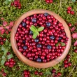 Stock Photo: Autumn berrys