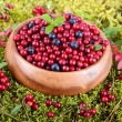 Stock Photo: Berrys in moss