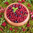 Autumn berrys in moss — Stock Photo