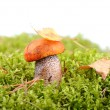 Stock Photo: Mushroom in forest