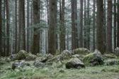 Tajemniczy las — Zdjęcie stockowe