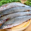 Fresh sea fish — Stock Photo