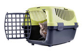 Cat in carrier box — Photo