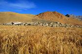 Tibetan village — Стоковое фото