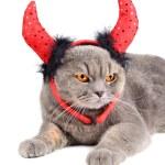 Постер, плакат: Devil cat