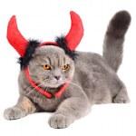 ������, ������: Devil cat