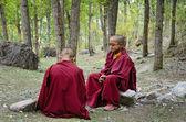 Jovens monges tibetanos — Fotografia Stock