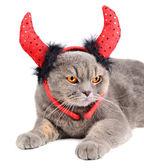 Devil cat — Stock Photo