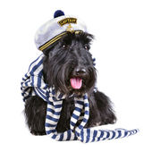 Captain dog — Stock Photo