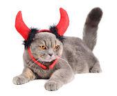 Duivel kat — Stockfoto