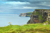 Ireland coast — Stock Photo