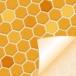 Abstract honey background - Stock Vector