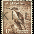 AUSTRALIA - CIRCA 1942 Kookaburra - Stock Photo