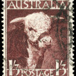 Royalty-Free Stock Photo: AUSTRALIA - CIRCA 1948 Hereford Bull