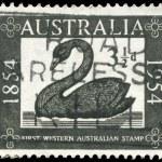 AUSTRALIA - CIRCA 1954 Swan — Stock Photo