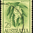 Stock Photo: AUSTRALI- CIRC1959 Wattle
