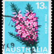 Stock Photo: AUSTRALI- CIRC1968 Pink Heath