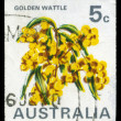 Stock Photo: AUSTRALI- CIRC1970 Golden Wattle