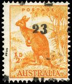 AUSTRALIA - CIRCA 1942 Kangaroo — Stock Photo