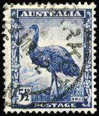 AUSTRALIA - CIRCA 1942 Emu — Stock Photo
