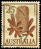 AUSTRALIA - CIRCA 1960 Banksia — Foto de Stock